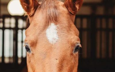 3 Things You Need For Your Equine Business To Stay Ahead Of The Game In 2021