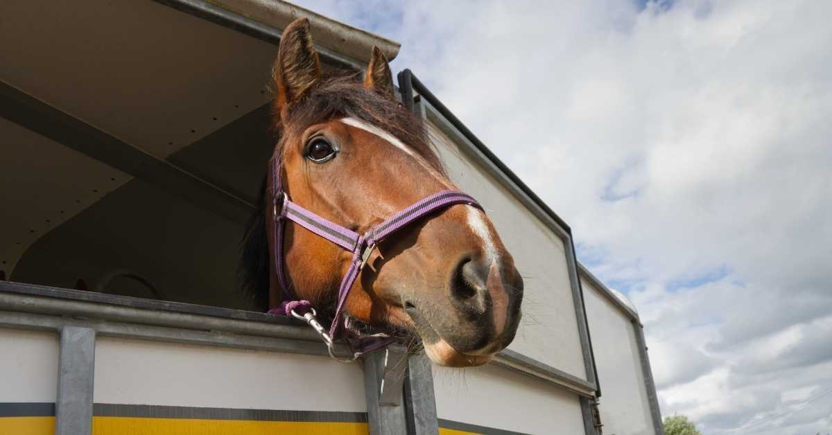 equine transport business